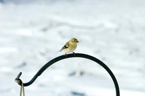 2010-02-01_feeder_snow_071a